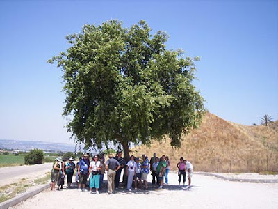 Megiddo Shade
