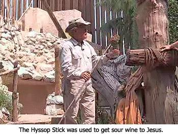 Hyssop Stick