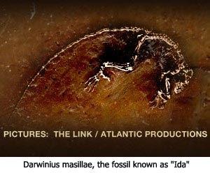 Fossil Ida