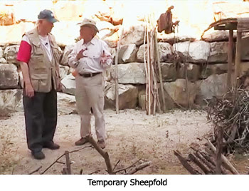 Temporary Sheepfold