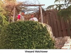Vineyard Watchtower