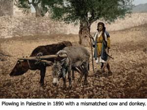 Plowing in 1890