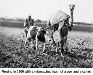 Plowing in 1900