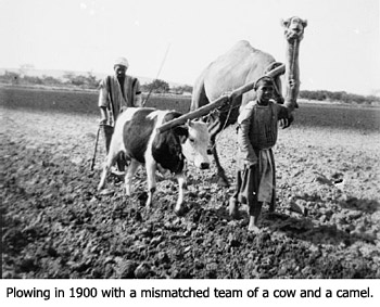 Plowing in 1900