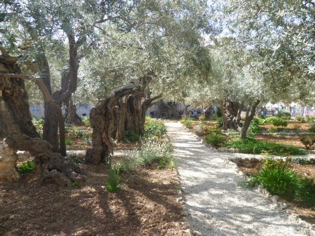 Garden of Gethsemene