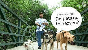 The Inbox Episode 13 Pets in Heaven