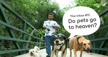The Inbox Episode 13 Pets in Heaven