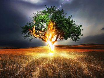 Lightning Flash on Tree