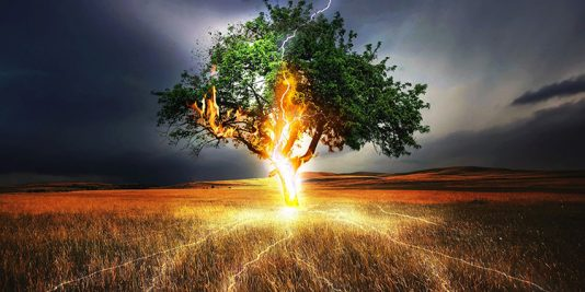 Lightning Flash on Tree